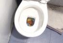 PATO WC - Trompas de farlopio